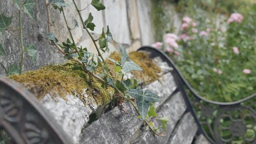 Rustic Bench With Climbing Plant Outdoors