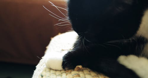A Cat Grooming His Fur