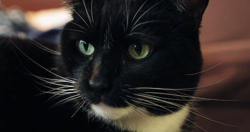 The Face Of A Pet Cat
