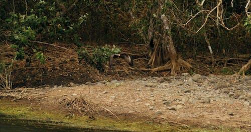 매가 땅에 가까이 날아 가면서 점차 나무 위로 올라가는 슬로우 모션 영상