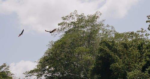 Deux Aigles Planant Dans Le Ciel