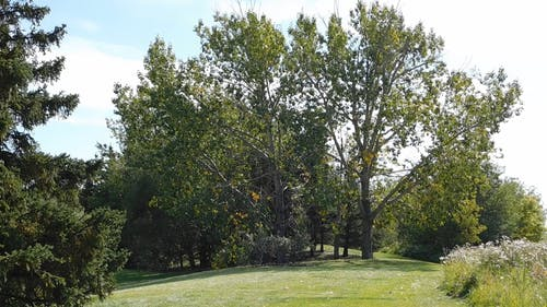 Tall Trees Growing In A Garden Park