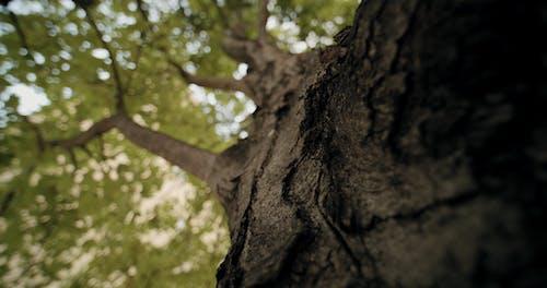 A Close-up Shot Of A Tree Bark
