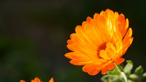 Close-up Of A Vibrant Yellow Flower In Bloom