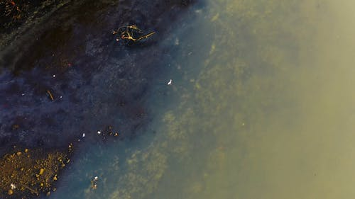 From Above Footage Of An Egret Walking On Marshland