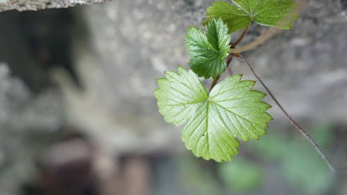 The Growing Leaves Of A Plant