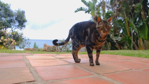 A Pet Cat On The Brick Tile Flooring