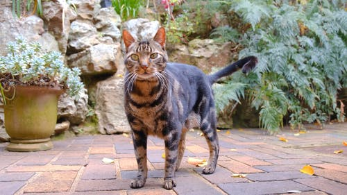 A Pet Cat Standing On The Brick Floor Of A Garden