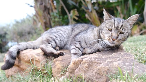 A Cat Resting On A Rock