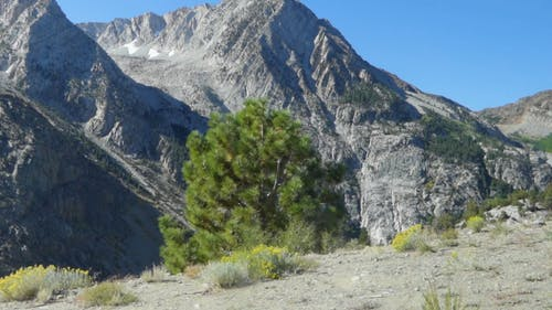 View A The Rocky Mountains On Arid Grounds Close To A Cliff