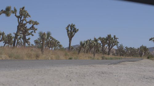 Motor Vehicles Traveling On A Road With Cactus Trees On The Roadside