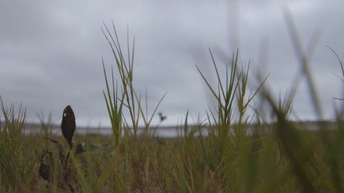 Wild Grass Plants Vibrating With The Blows Of The Wind