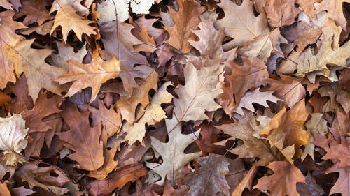 Stop Motion Footage Of A Heap Of dried Leaves On The Ground