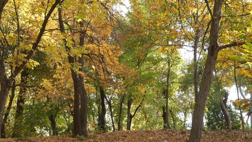 Trees And Its Fallen Leaves During Autumn Season