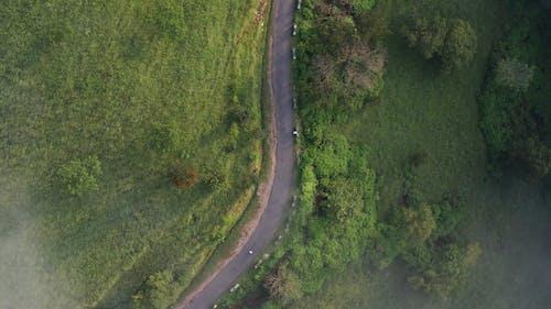 芝生の間の道路の鳥瞰図