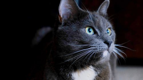 The Full Facial Features Of A Pet Cat