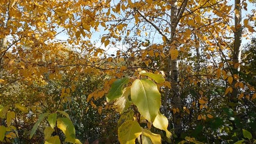 The Changing Color Of The Leaves During Autumn
