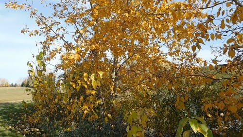 The Color Of The Leaves During Autumn