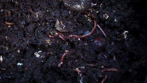 Worms Crawling On The Surface Of Soil