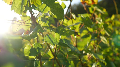 Video Of Green Plants On An Orchard Farm