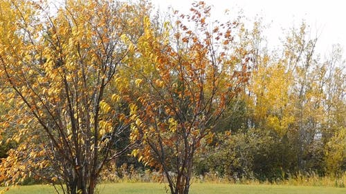 Colors Of Trees And Leaves During Autumn