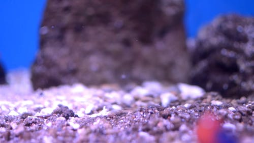 Close-Up View Of Small Fishes Inside An Aquarium