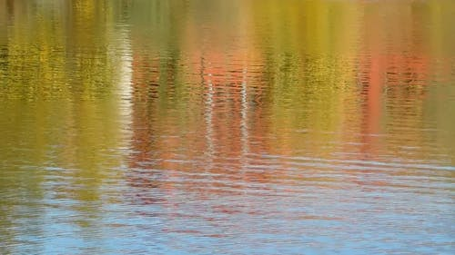 Colors Of The Tree Leaves Reflecting From A Lake Surface