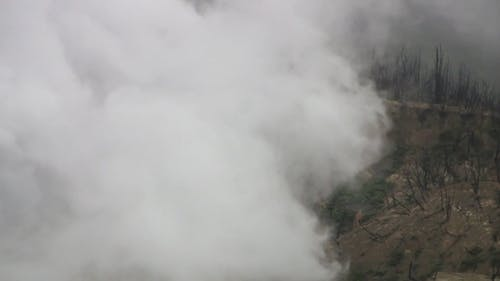Forest Land Covered With Smoke
