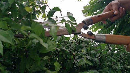 Budayıcı Kullanarak Bahçe Bitkilerini Budayan Kişi