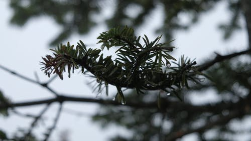 Close-Up View Of Leaves With Water Droplets