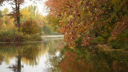 A Lake Surrounded By Trees With Autumn Leaves
