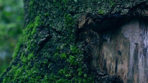 Moss Growing On A Tree Bark