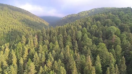 Mountain Ranges Covered By Dense Forest