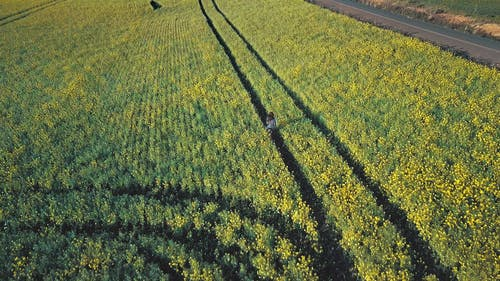 Aerial Footage Of A Woman Running In A Field Of Flowers