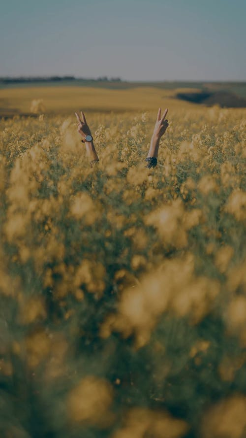 A Person Hiding In A Field Of Flowers Raised His Hand Doing The Peace Sign