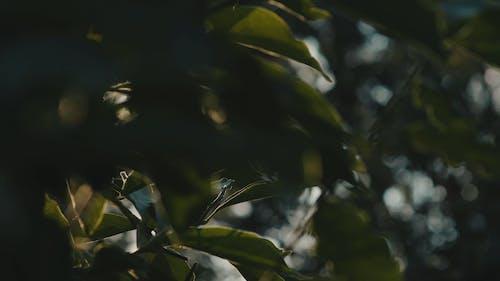 太陽の光線から日陰を提供する葉