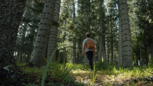 A Man Looking In Astonishment Over The Tall Trees In The Forest