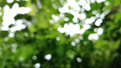 Close-up Of Rain Drops Passing Through The Leaves Of A Tree