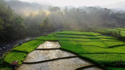Rice Field Terraces On Mountain Valleys And Plateaus