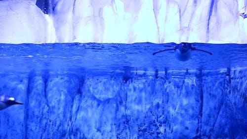 企鵝在水族館裡游泳