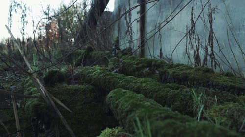 Moss Growing On Abandoned Logs Lying On The Ground Beside a Collapsed Wall