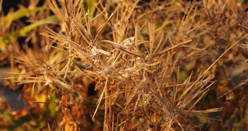 Spider Web Residue On Stalk Of A Dry Plants
