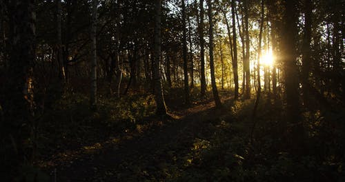 Rays Of The Sun Peeks Through A Forest