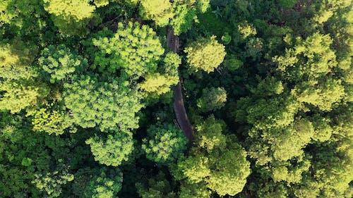 穿过森林通往乡村社区的修筑之路