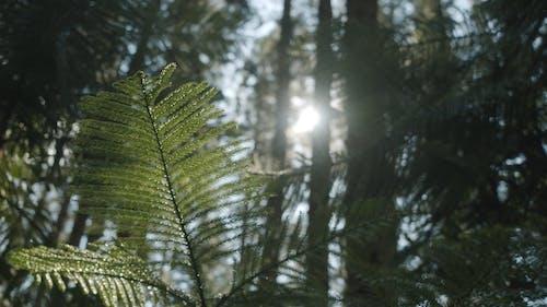 森の中の常緑植物の葉