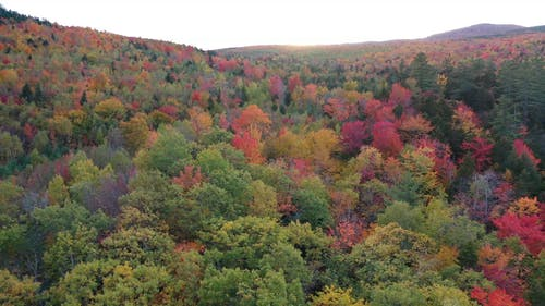 Changing Colors Of A Forest In Autumn