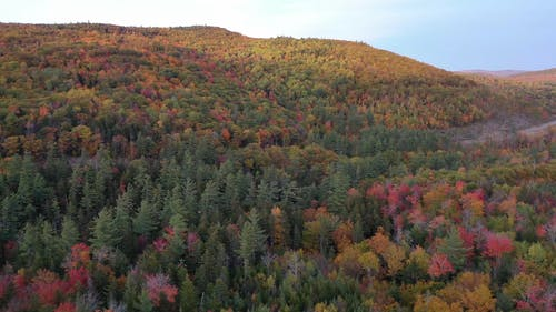 Drone Footage Of A Dense Forest Changing Colors During Autumn Season