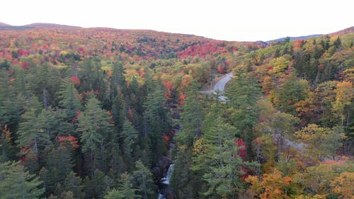 The Changing Colors Of The Forest During Autumn Season