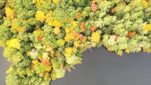 A Lake Island With Dense Trees