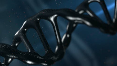 A Video Illustration Of A Human Deoxyribonucleic Acid